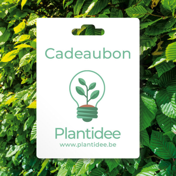 plantidee - cadeaubon